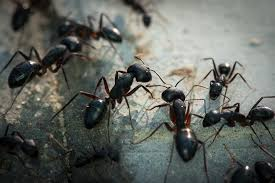 10 Interesting Facts about Ants