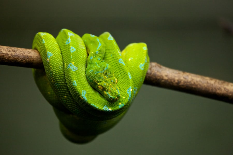 Fascinating Facts about Snakes | Types | Information