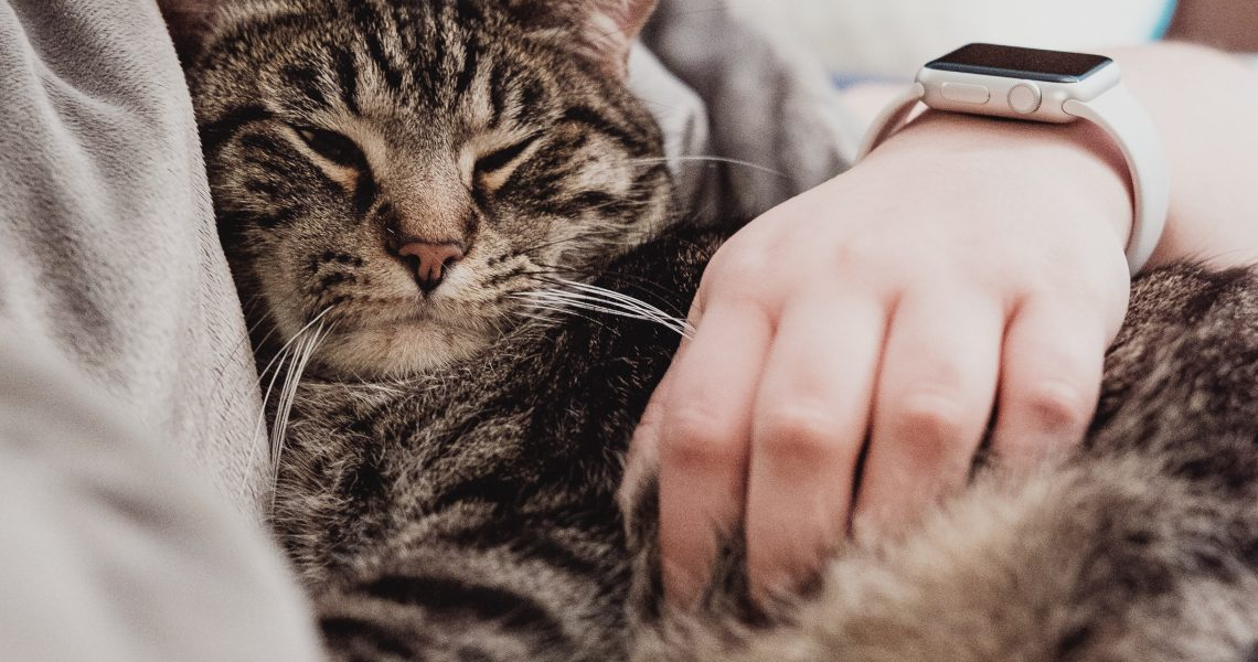 Why Does My Cat Lick Me? 5 Satisfying Reasons